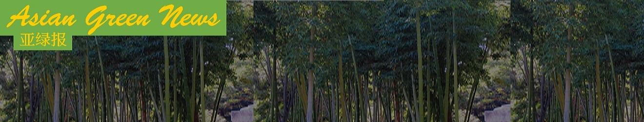 091715_Bamboo Header_c