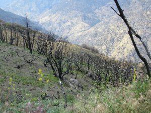 Rough swept upwards from across the range