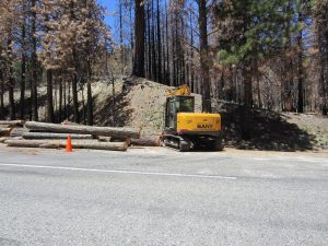 Logging dead trees a priority for road safety