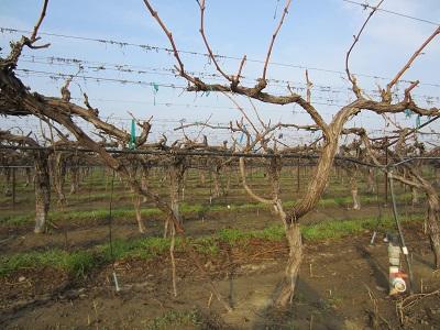 California drought, Sanger
