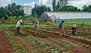Community Gardens Cuba