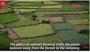 Small plots allow organic growing methods